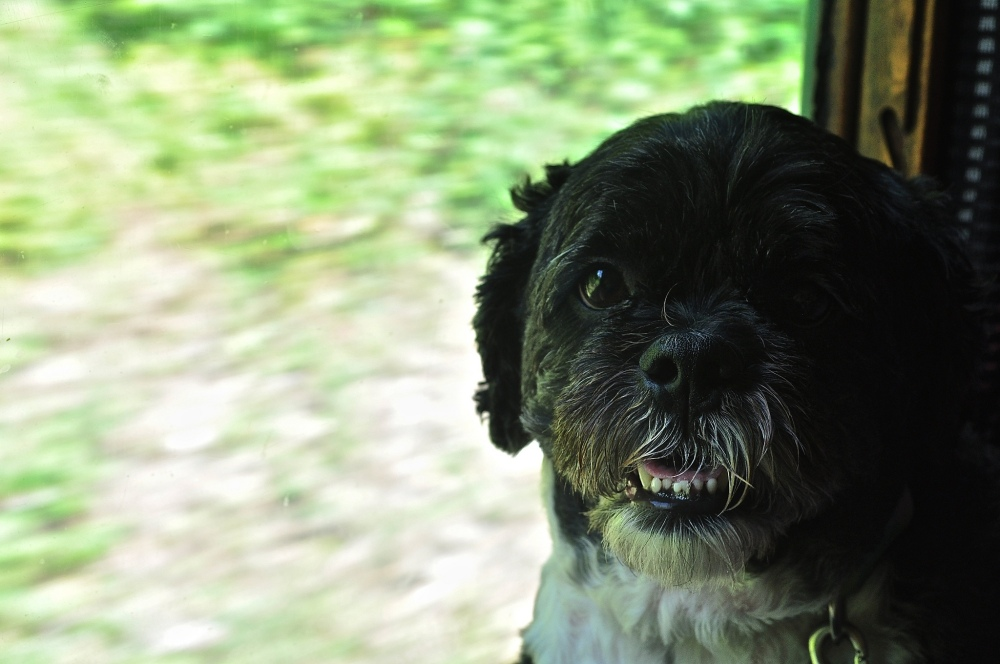 The Hound onboard The Watercress Line