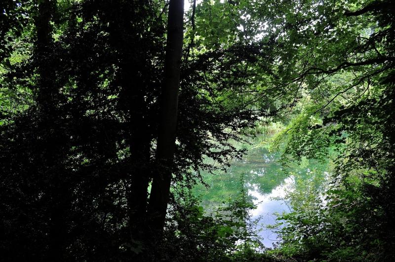 Sherbourne Pond, Shere, Surrey