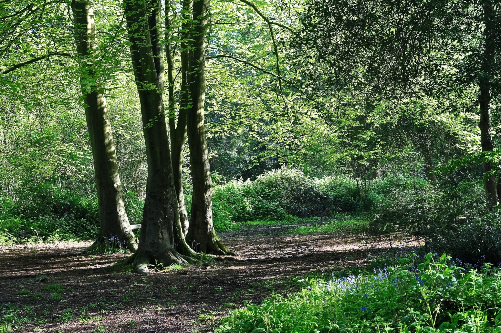 Park Wood, Waterlooville, Hampshire