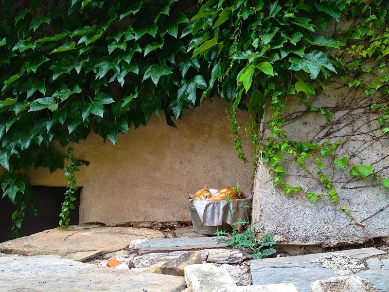 Cordes-sur-Ciel resident by Sue Lowry