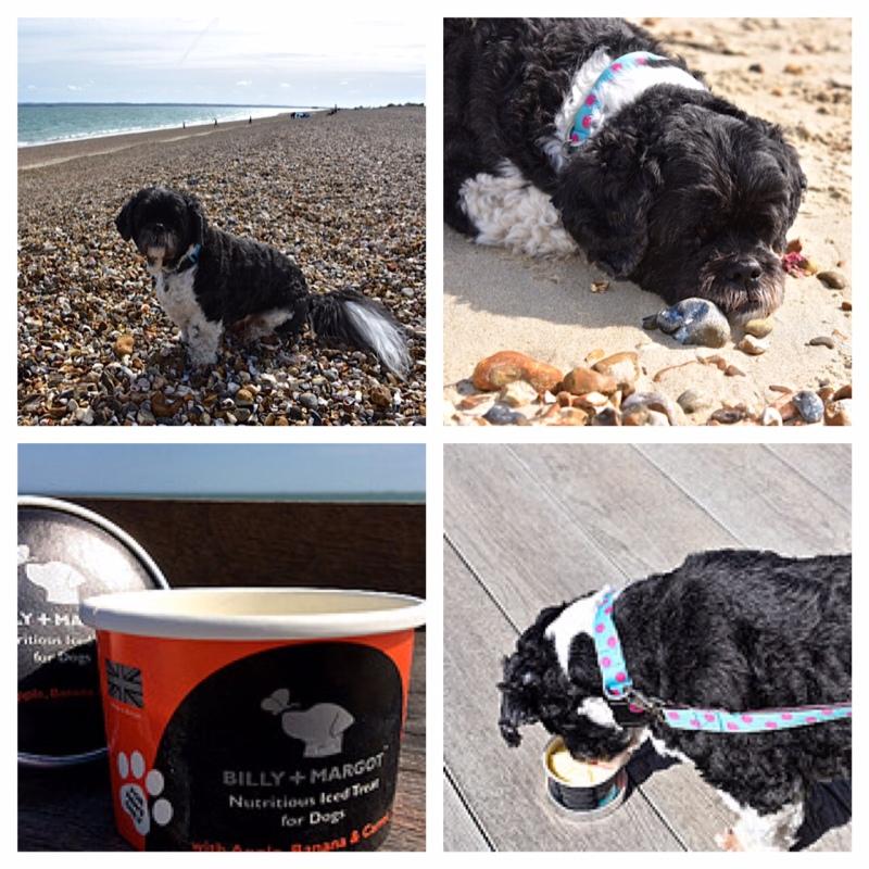 The Hound on Southsea Beach with Billy and Margot doggy ice-cream