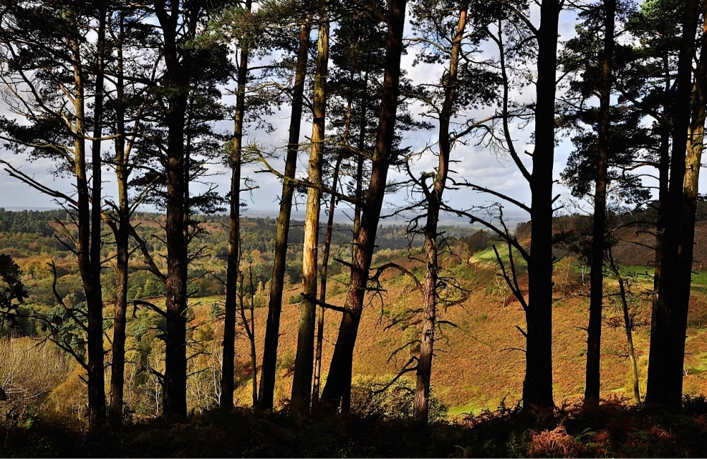 Hindhead Commons, Surrey by Sue Lowry