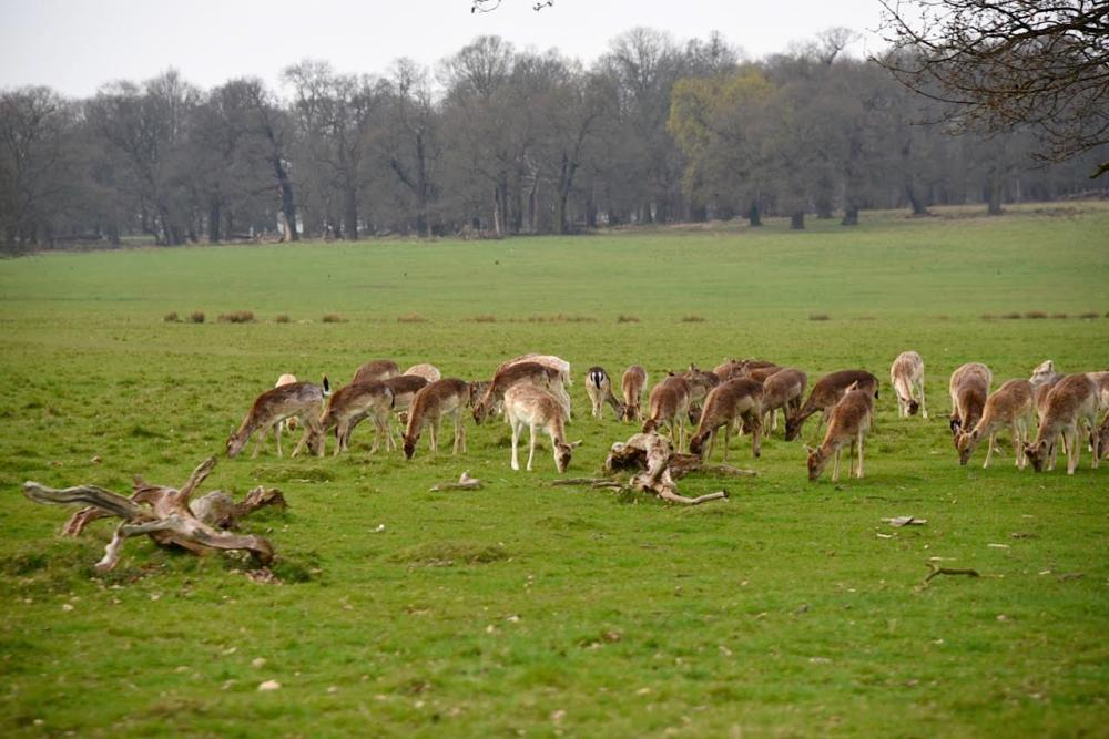 Richmond Park by Sue Lowry
