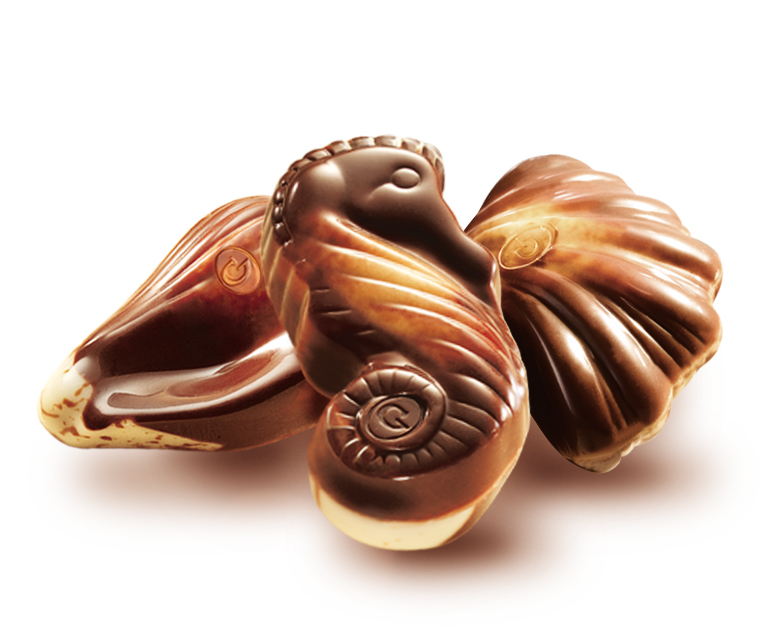 The seahorse with shells -Chocolaterie Guylian